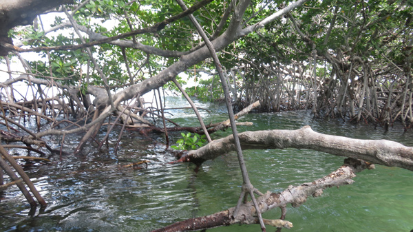 image of waves propagating through mangrove islandnear Key West, Florida